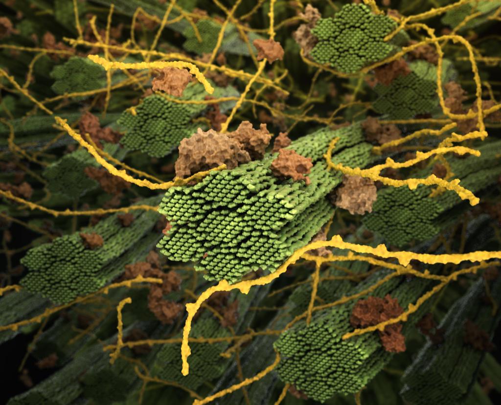 Plant Cell Wall - ORNL - Center for Molecular Biophysics